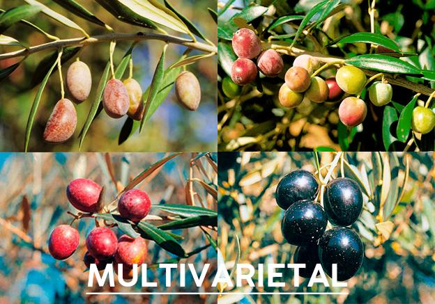 aceite-de-oliva-multivarietal