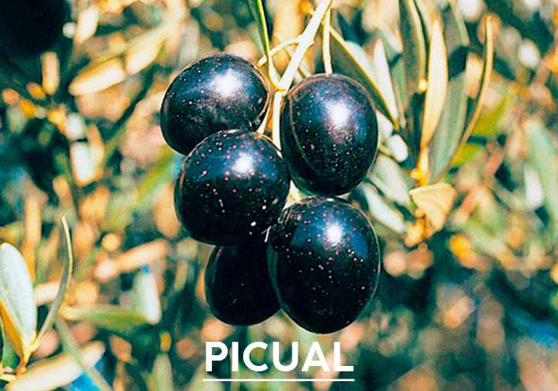 aceite-de-oliva-picual1